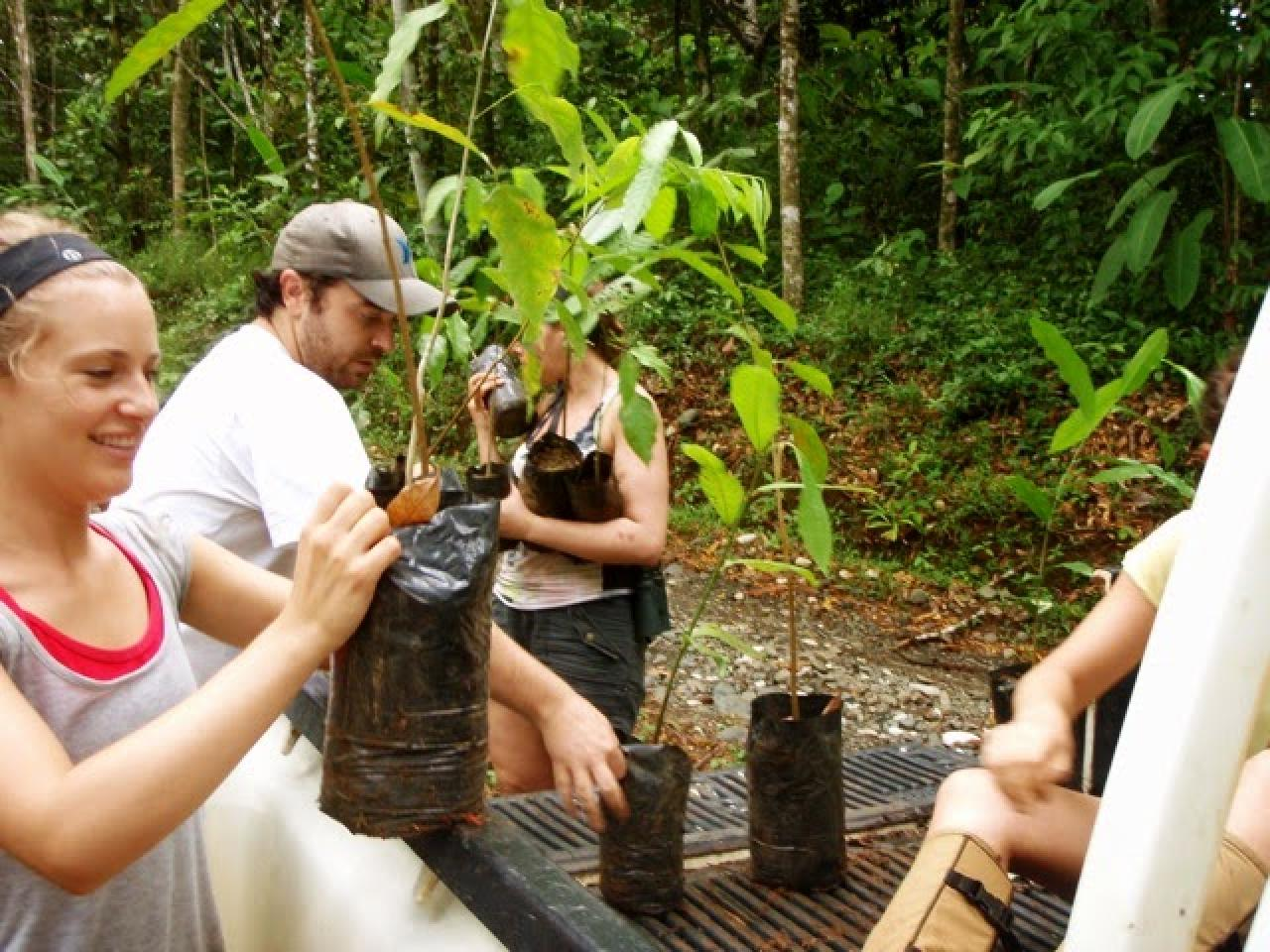 Volunteer in Reforestation and Recycling