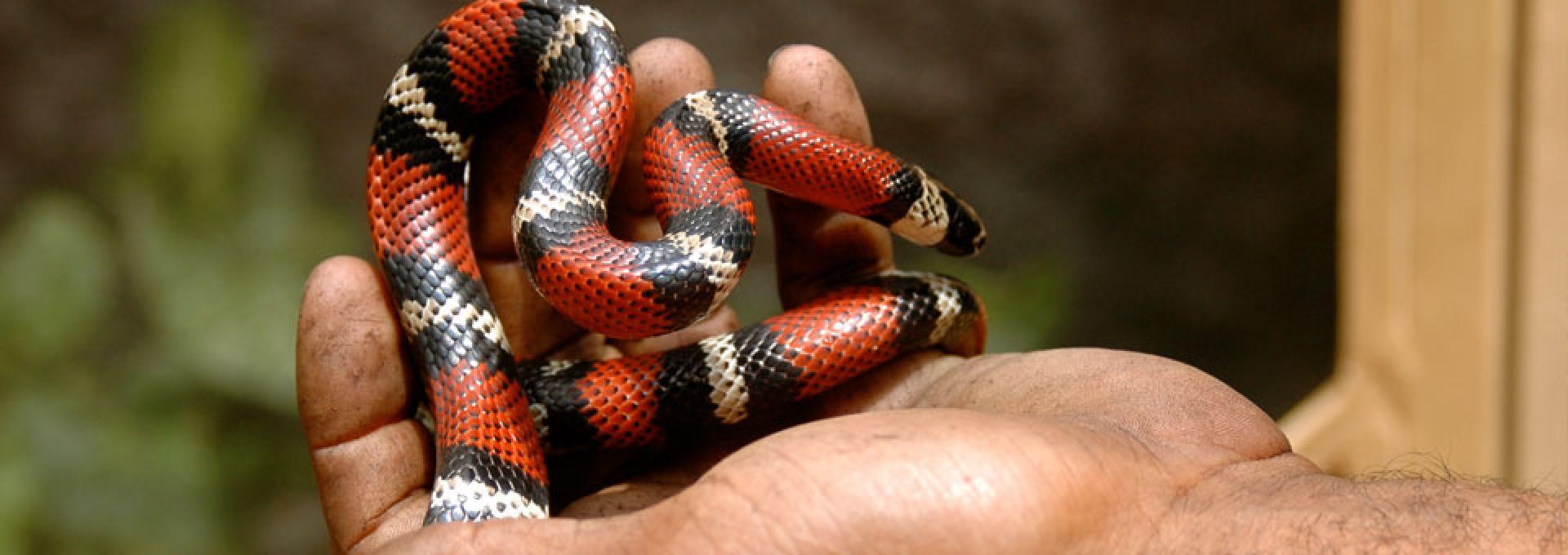Voluntario en Proyecto de Crianza de Serpientes