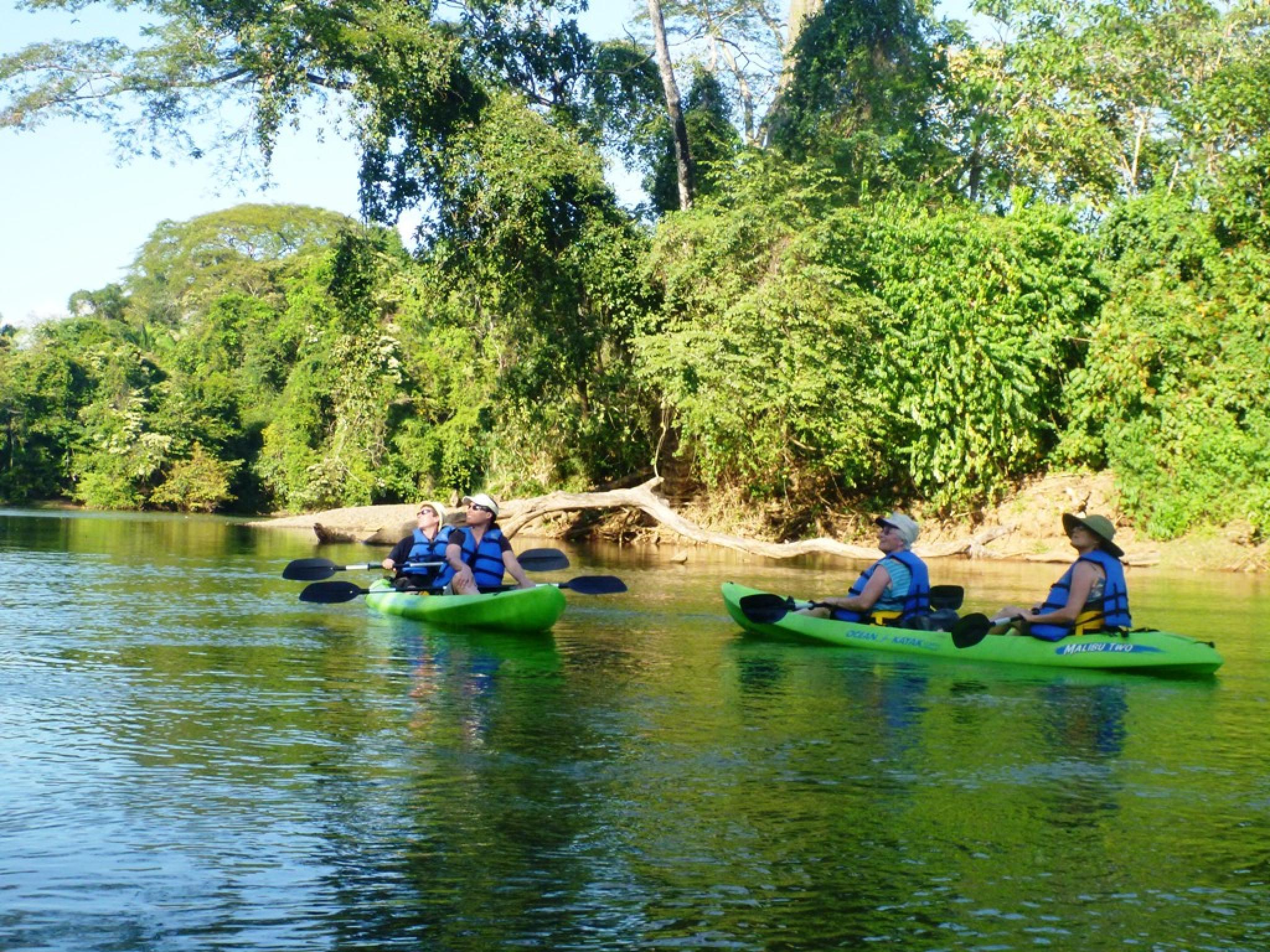 Tour de naturaleza y manglar en kayak
