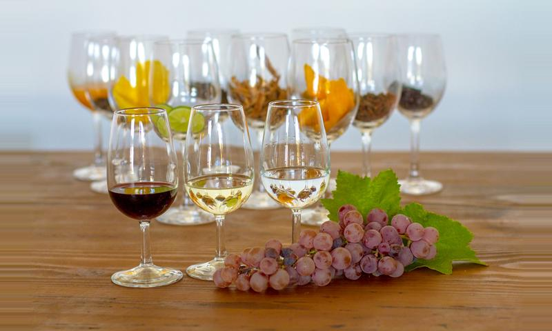 Lunch with Wine Pairing and Queirolo Vineyard Tour