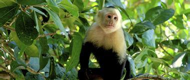 Costa Rica Costa Rica Mangrove Tours