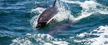 Costa Rica Costa Rica Marine Mammal Observation Tours
