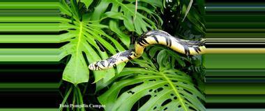Costa Rica Costa Rica Species Exhibits