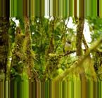 Ecuador Rainforests