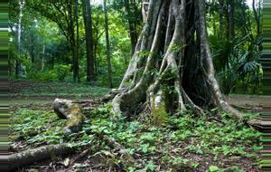Guatemala Parque Nacional