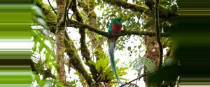 Guatemala Bosque Nuboso