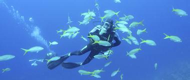 Panama Scuba Diving in Panama