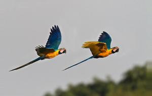 Peru Reserva